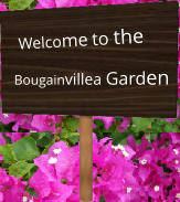 Welcome to the Bougainvillea Garden